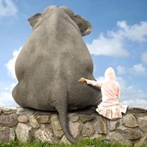 o-ELEPHANT-facebook